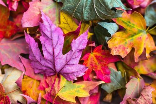 Autumn's Potent Seasonal Shift…