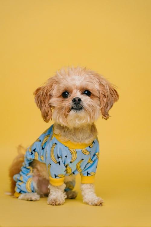 Pajama Day!!!